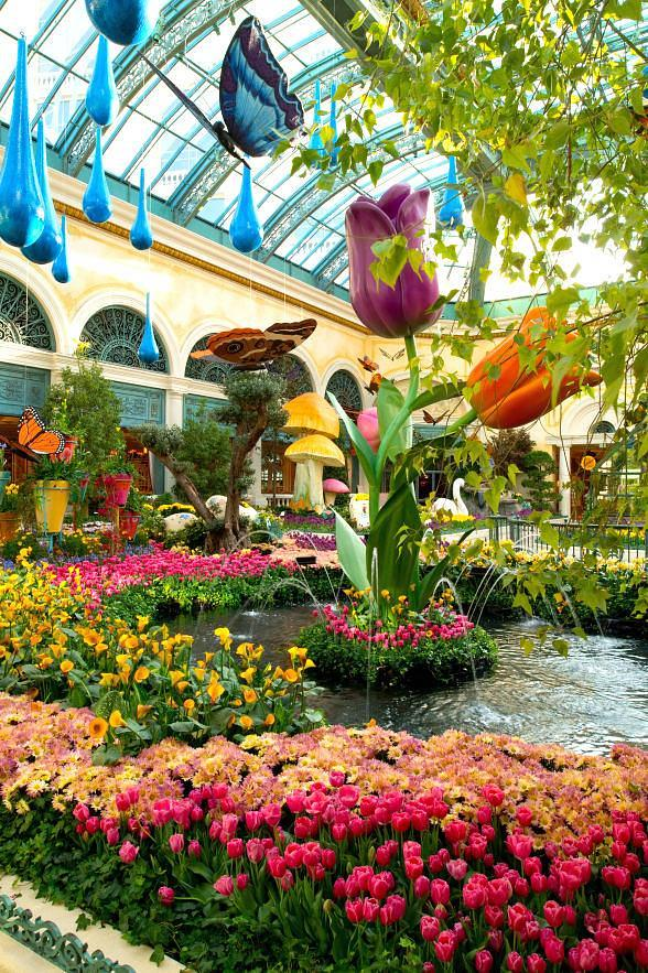 Spring Flora and Butterflies are Abloom at Bellagio