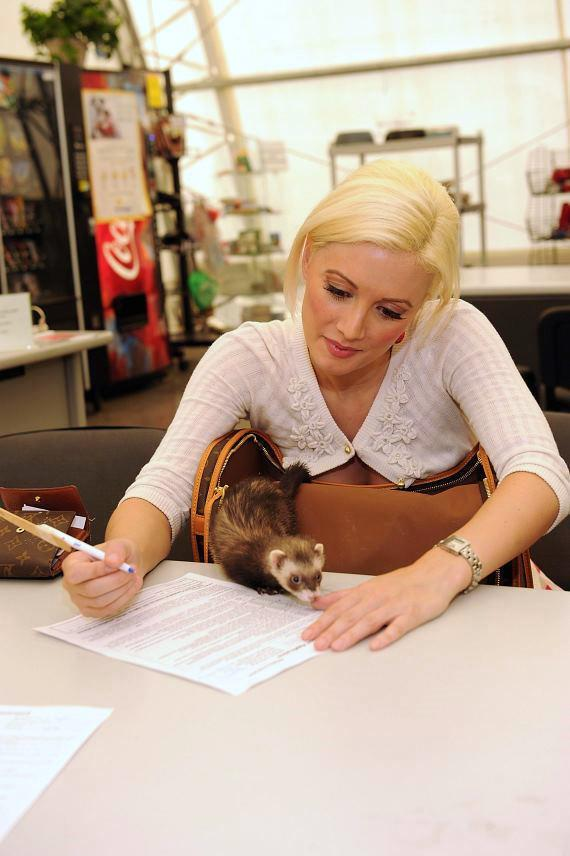 Holly Madison adopts a mate for her ferret at The Animal Foundation