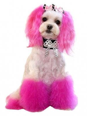 Princess of Beverly Hills, The World's Most Glamorous Dog, Debuts at Las Vegas Licensing Expo 2015