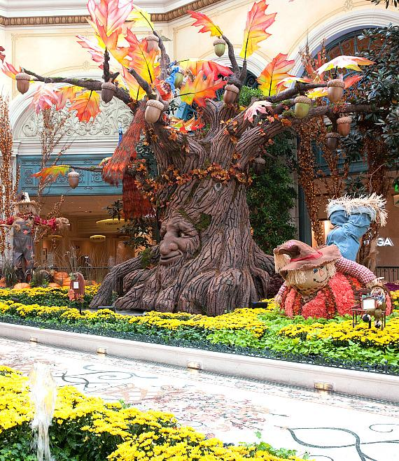Experience the Richness of Autumn Inside Bellagio's Conservatory & Botanical Gardens Harvest Display
