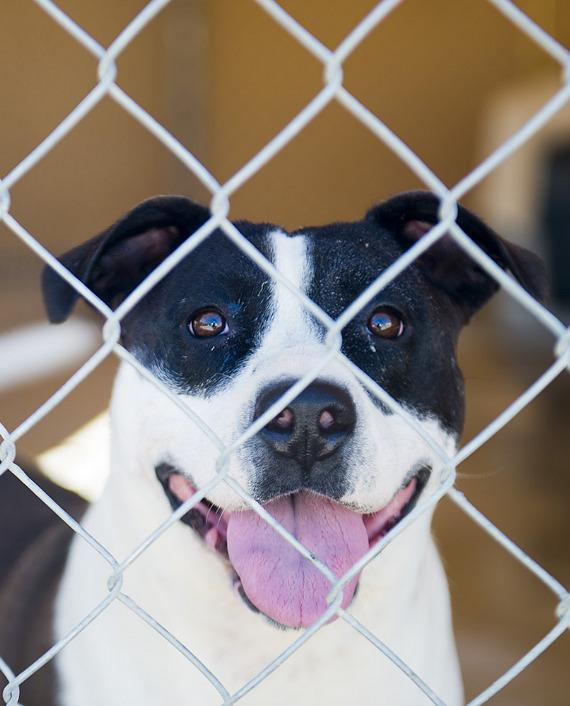 One of the dogs waiting for some kind, loving person to adopt them. How about you?