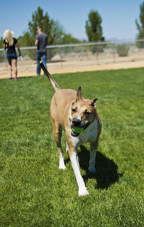 One of the shelter's dogs getting some exercise in the yard