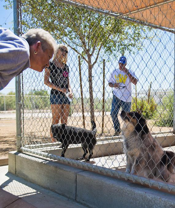 Chloe and the staff visit some dogs waiting to be adopted