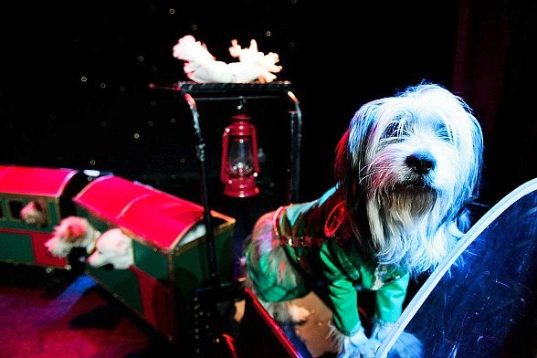 Las Vegas' favorite family show, Popovich Comedy Pet Theater, celebrates ten years on the Las Vegas Strip