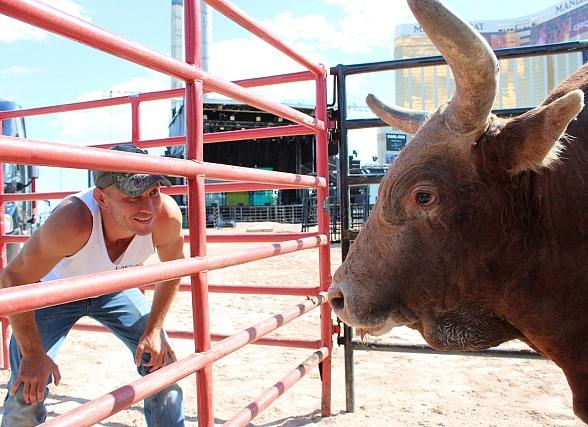 "UFC's Donald ""Cowboy"" Cerrone weighs in against PBR Bull Percolator"