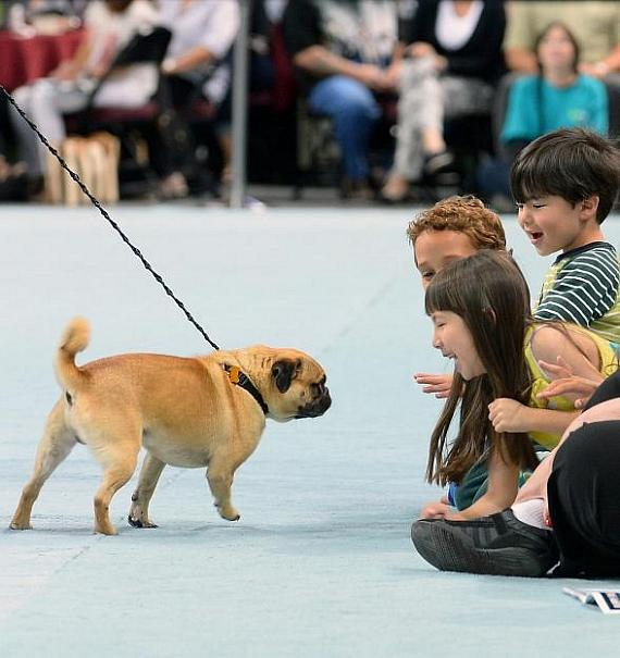 """Contestant Bogo greets excited spectators during 11th Annual """"Best in Show"""""""