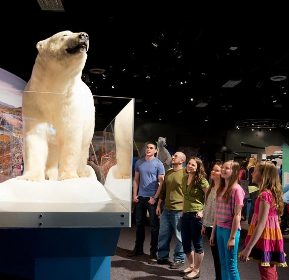 Stand next to an authentic polar bear specimen and examine its unique features and adaptations