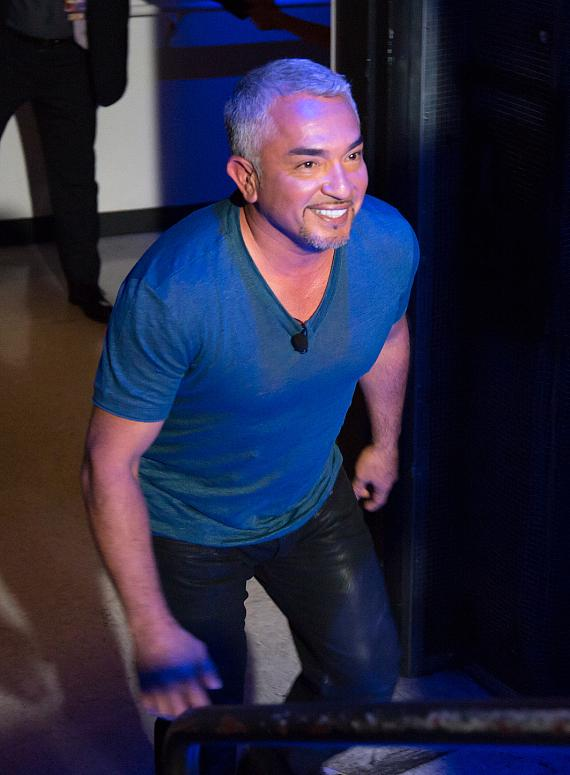 Cesar Millan takes the stage at The Pearl