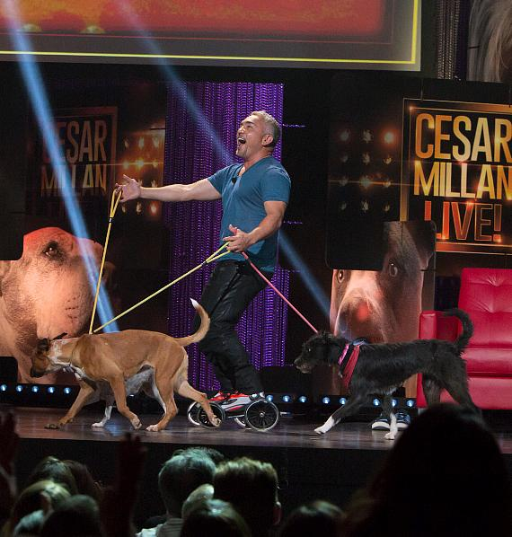 Cesar Millan roller blades on stage with three animal shelter dogs