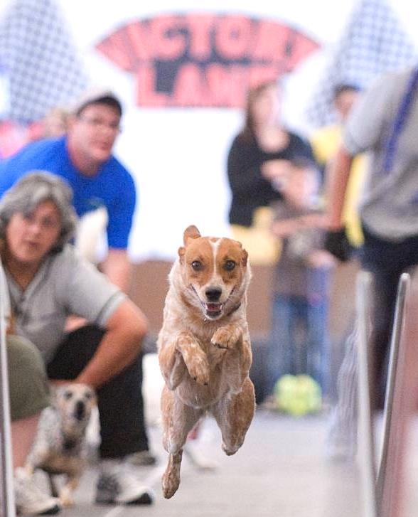LVMS to host Need4Speed Dog Flyball Tournament Benefitting Greg Biffle Foundation May 12-13