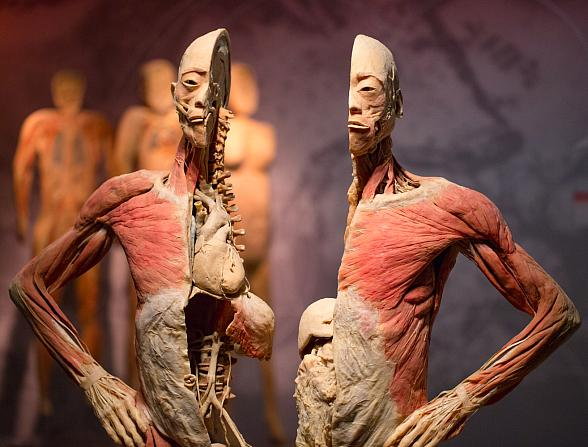 """""""Real Bodies"""" at Bally's – Stunning New Exhibition Explores the Human Body through Physiology, Culture and Emotion"""