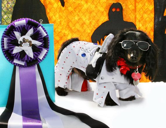 Contest winner Petey in costume as Elvis at Family, Fur & Fun Festival