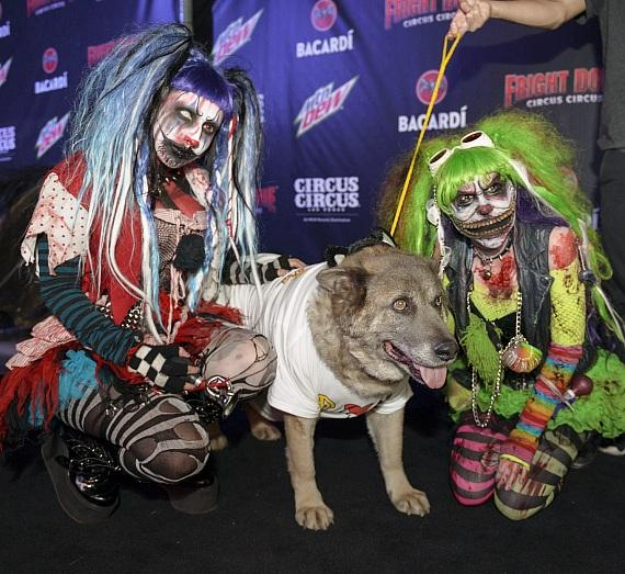 Nevada SPCA pup visits Fright Dome in Las Vegas