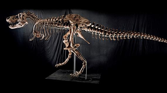 "Tyrannosaurus Rex Skeleton ""Samson"" to be auctioned at The Venetian Oct. 3"