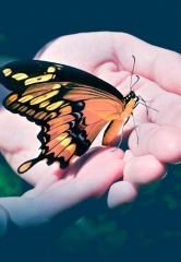 Nathan Adelson Hospice Holds 13th Annual 'John Anderson – Celebration of Life – Live Butterfly Release' May 1