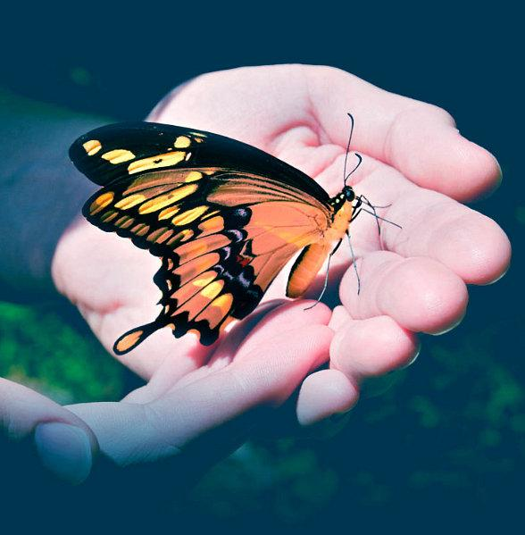 Nathan Adelson Hospice Holds 13th Annual 'John Anderson - Celebration of Life - Live Butterfly Release' May 1
