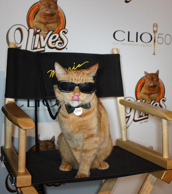 Morris the Cat at CLIO Awards in Las Vegas