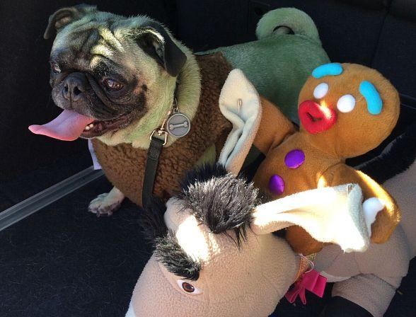 Southern Nevada Pug Rescue Hosts its 11th Pug-O-Rama at Silver Springs Recreation Center October 29