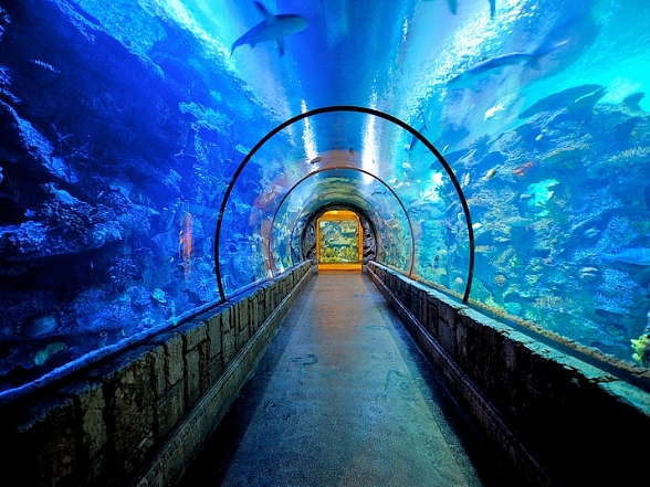 Celebrate World Oceans Day at Shark Reef Aquarium and Siegfried & Roy's Secret Garden and Dolphin Habitat June 7-8
