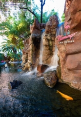 The Wildlife Habitat at Flamingo Las Vegas Turns 23