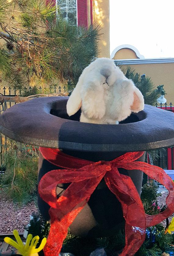 Rabbit in the Hat on top of MURRAY 'Celebrity Magician' Christmas Tree