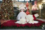 Bellagio-Conservatory-Winter-Display-2020-West-Bed-03