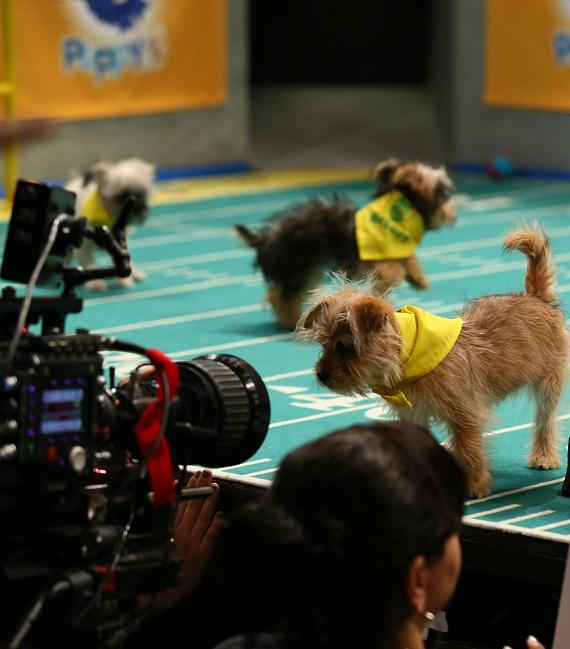 Barking Rights are Up for Grabs when Animal Planet's Puppy Bowl XIII Tears Up the Turf on Sunday, February 5