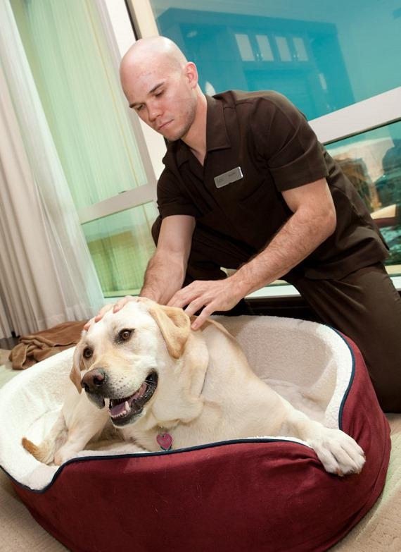 "Misty Marley, Star of ""Marley & Me"", Receives ""Paws Massage"" by The Spa at Trump"