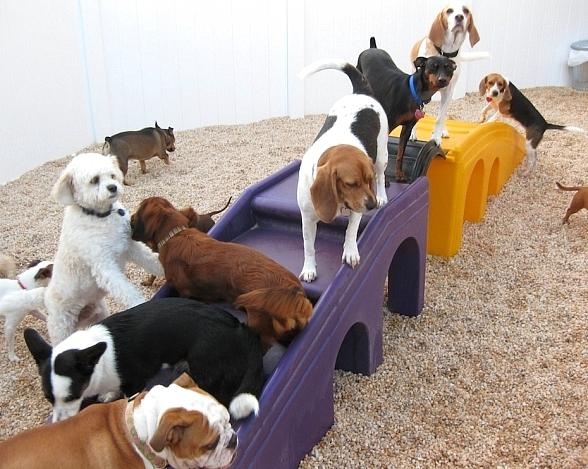 Camp Bow Wow Brings Premium Dog Day and Overnight Care to Henderson, NV
