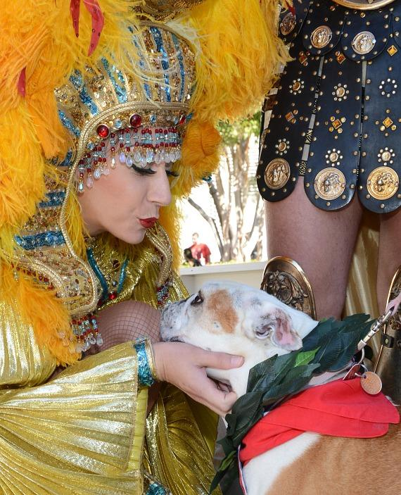 "Cleopatra crowns Lola as winner of the inaugural ""Running of the Bulldogs"" at Caesars Palace in Las Vegas"
