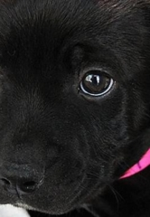 The Animal Foundation Joins Shelters and Rescue Groups Across Nevada for Maddie's Pet Adoption Days; All Dogs and Cats Are Available for Free Adoption April 27-28