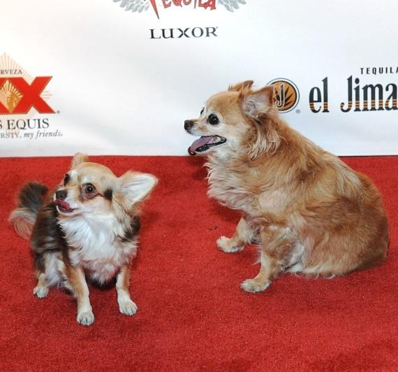 Kahlua and Ella walk the red carpet at Tacos & Tequila