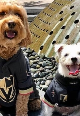 Bark & Winston's Pucks 'N' Paws Party – Canine Pals to Throw Charity Event for The Animal Foundation Sept. 25
