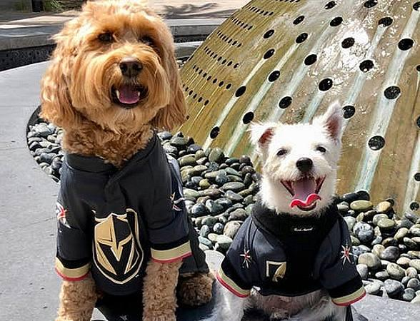 Bark & Winston's Pucks 'N' Paws Party - Canine Pals to Throw Charity Event for The Animal Foundation Sept. 25
