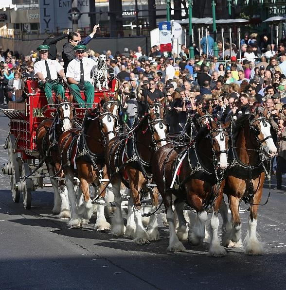 World Famous Budweiser Clydesdales trot down Las Vegas Boulevard to Commemorate Grand Opening of Beer Park at Paris Las Vegas