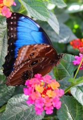 Springs Preserve Butterfly Habitat Open for Fall 2016
