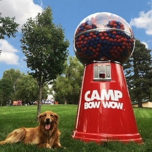 Camp Bow Wow Donates $50K & Helps 50+ Dogs Get Adopted at #GiveAFetch Kickoff