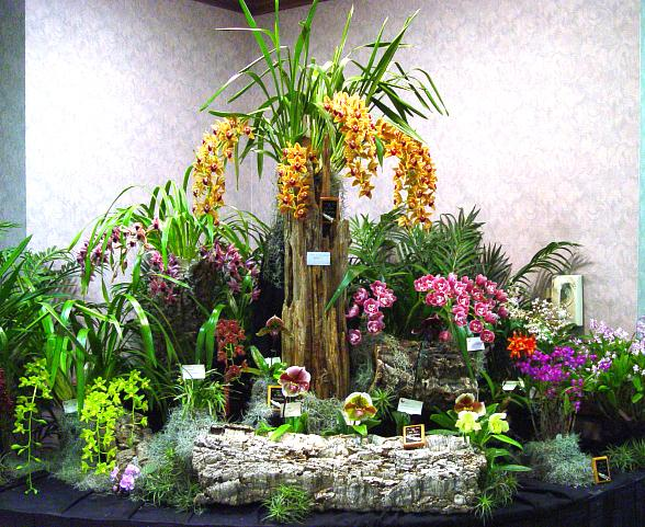 California Hotel and Casino Hosts Exquisite Cymbidium Orchid Show, April 15-17