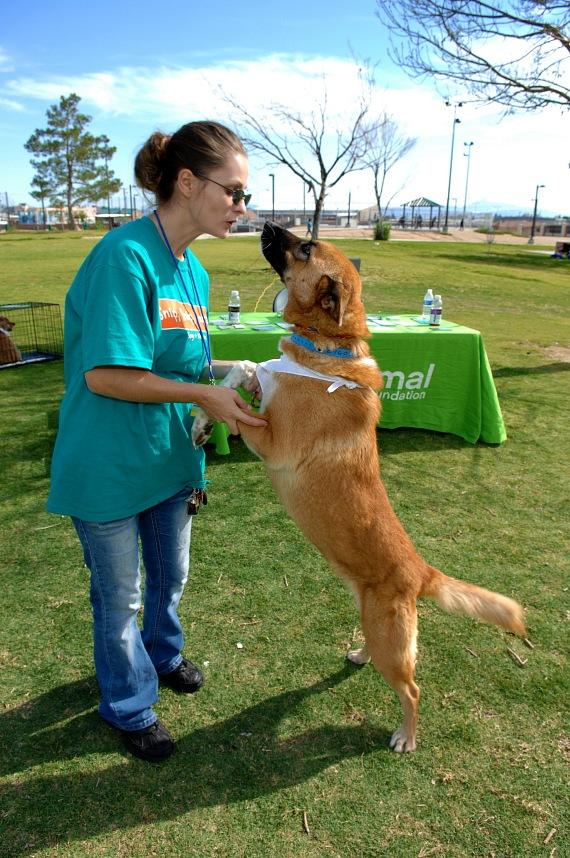 Volunteer Laree Bice at the Forever Home Picnic to Benefit the Lied Animal Foundation