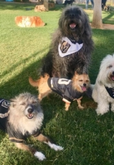 """The Hydrant Club Hosts """"Pups And Poetry"""" Raising Funds for Alzheimer's"""