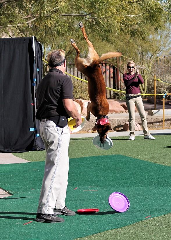 "See Amazing Tricks at Springs Preserve's ""Jump! the Ultimate Dog Show"" with Shows Twice Daily on Weekends Through January 1, 2019"