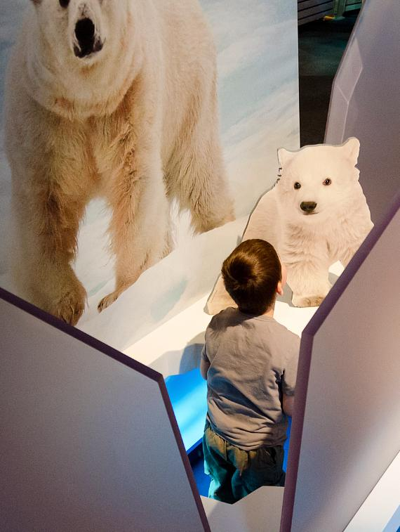 """Crawl beneath the ice"" to investigate the Arctic Ocean's food web, but be careful, there may be a polar bear waiting to greet you when you pop up through the sea ice!"