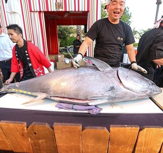 Naked Fish carves up a 240lb tuna