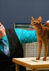 "The ""March Madness Cat Show"" Comes to Henderson March 9-11"