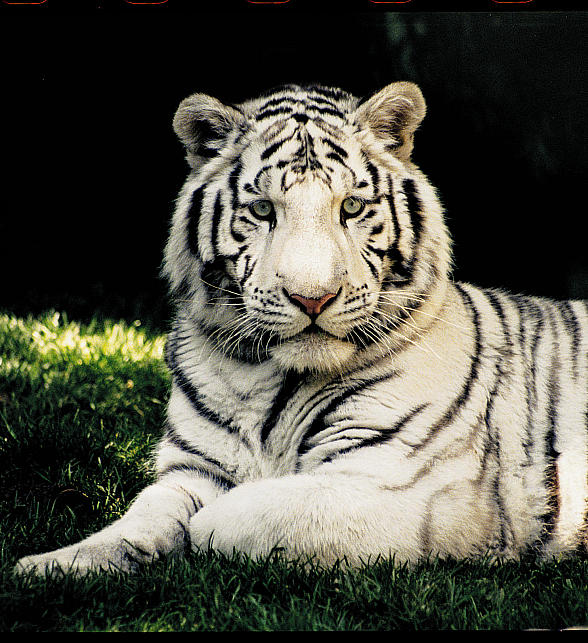 Celebrate World Wildlife Day at Siegfried & Roy's Secret Garden and Dolphin Habitat at The Mirage March 3