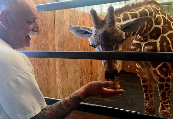 Owner and caretaker Keith Evans feeds the giraffe