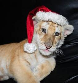 Lion cub from Untamed Illusions
