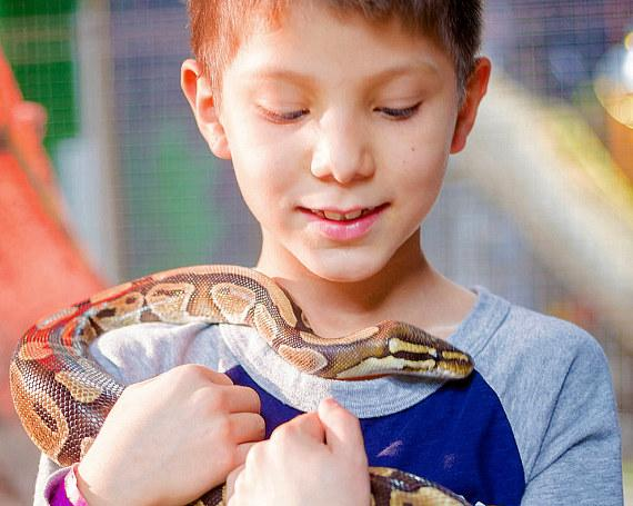 Boy with snake at SeaQuest Interactive Aquarium