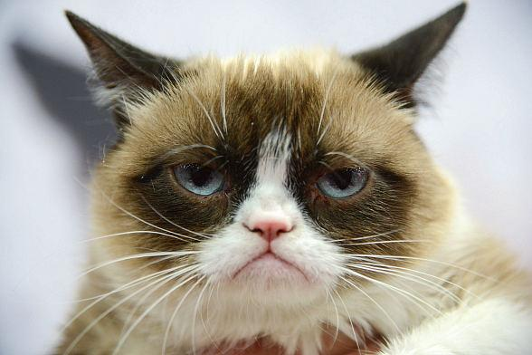 Grumpy Cat Celebrates Book Tour at Kitson Las Vegas on Tuesday August 5